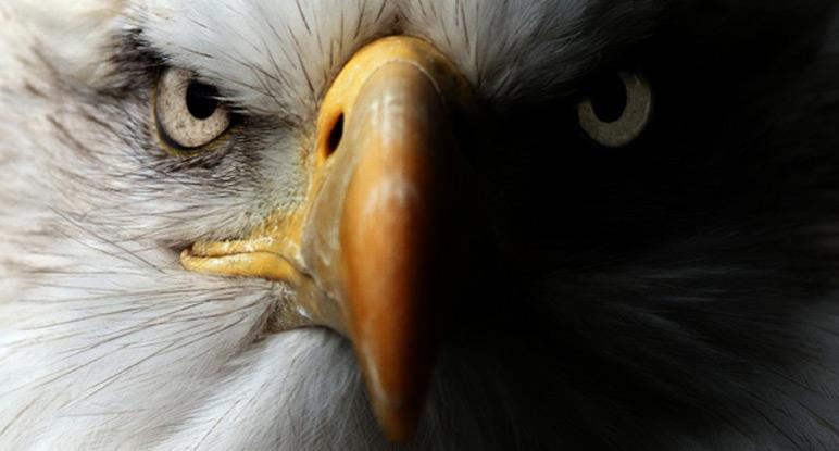 Beschreibung Aktionstag Tag des Vogels