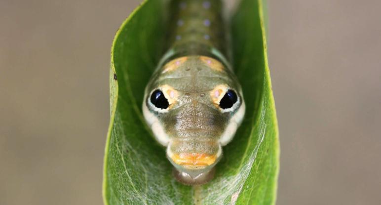 Beschreibung Welttag der freilebenden Tiere und Pflanzen oder Tag des Artenschutzes