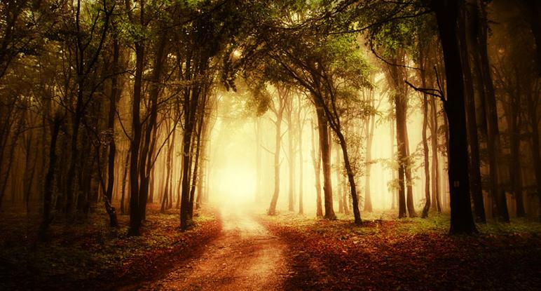 Beschreibung Welttag Internationaler Tag der Wälder