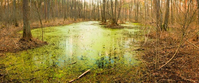 Beschreibung Gedenktag Welttag der Feuchtgebiete