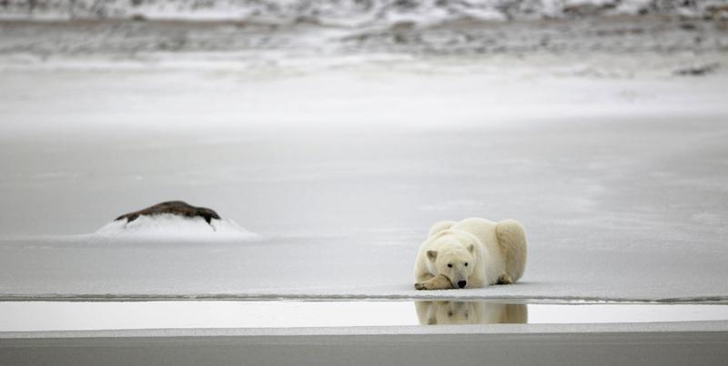 Beschreibung Aktionstag Tag des Eisbären