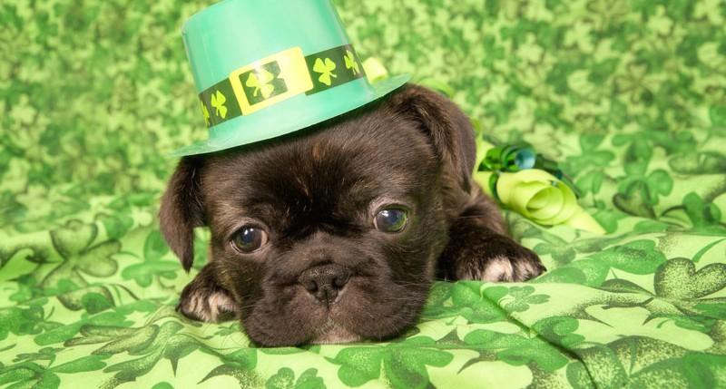 Beschreibung Feiertag St. Patrick's Day