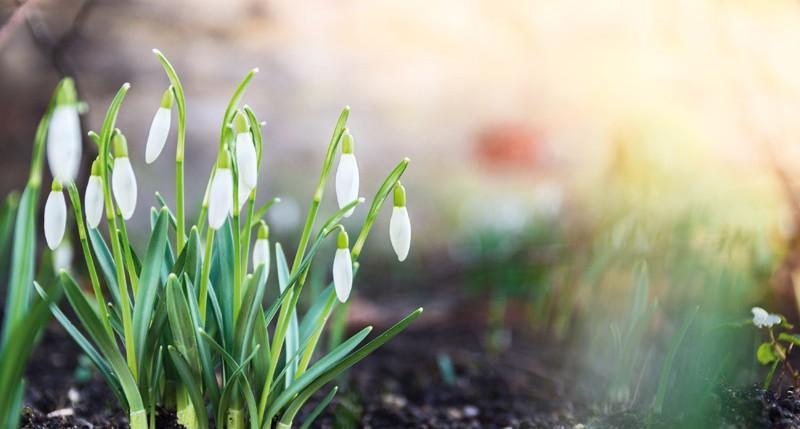 Beschreibung Jahreszeiten Kalendarischer Frühlingsanfang