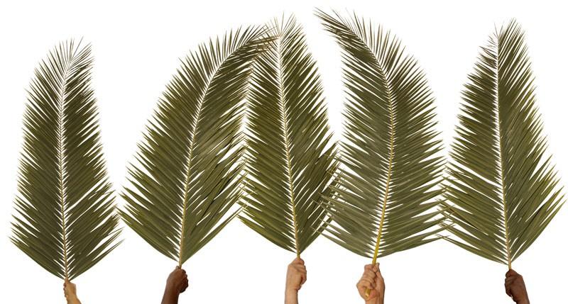 Beschreibung Feiertag Palmsonntag