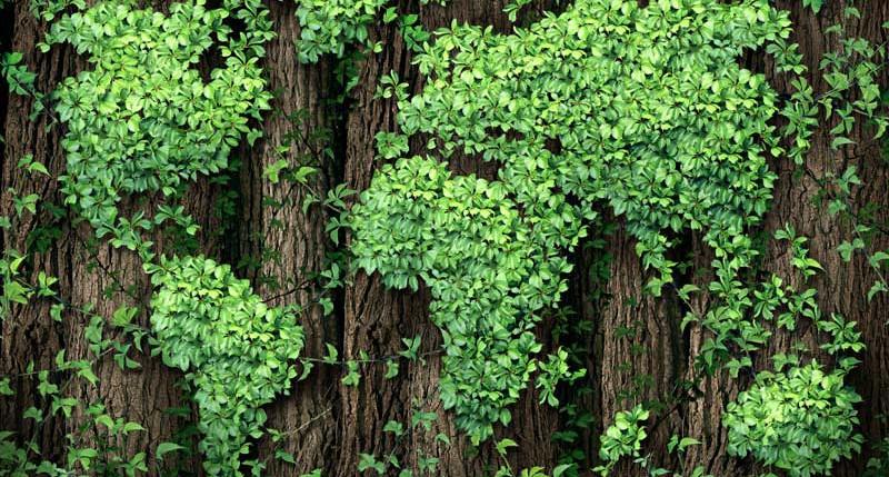 Beschreibung Aktionstag Ehrentag der Pflanze