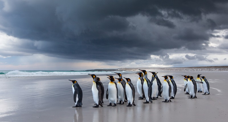 Beschreibung Aktionstag Welt-Pinguin-Tag