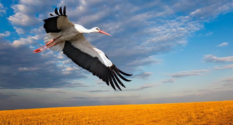 Beschreibung Gedenktag Weltzugvogeltag