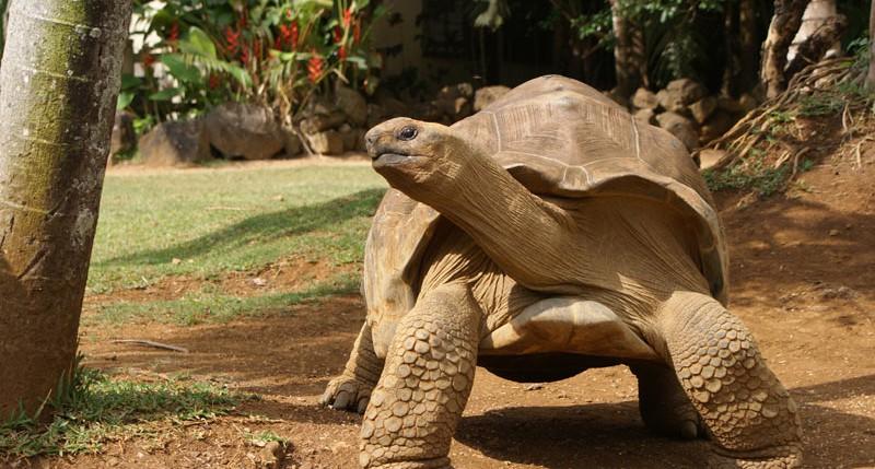 Beschreibung Aktionstag Welt-Schildkröten-Tag