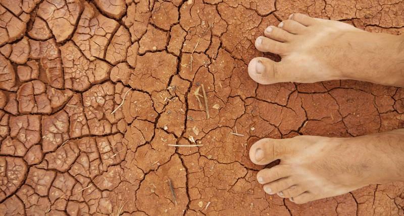 Beschreibung Welttag für die Bekämpfung von Wüstenbildung und Dürre