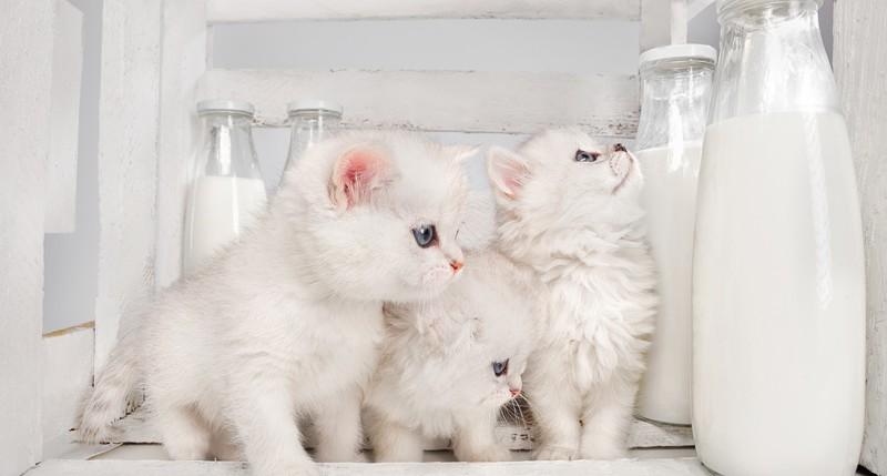 Beschreibung Aktionstag Internationaler Katzentag