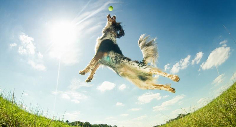 Beschreibung Aktionstag National Dog Day oder Tag des Hundes