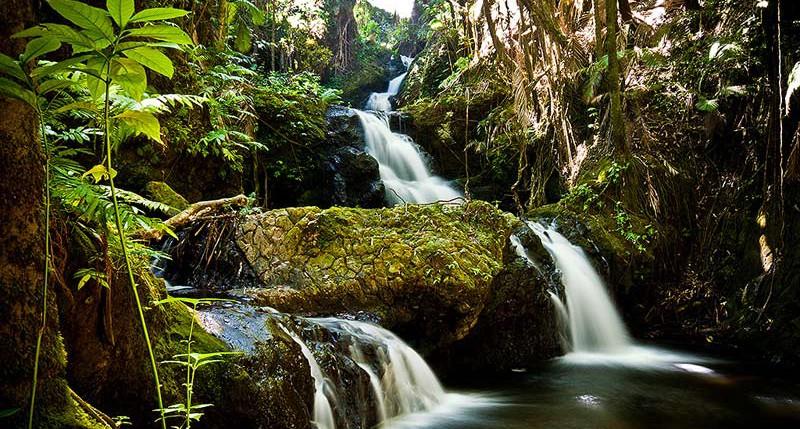 Beschreibung Aktionstag Tag der Tropenwälder