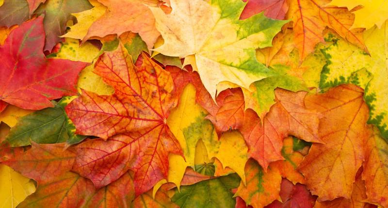 Beschreibung Jahreszeiten Kalendarische Herbstanfang
