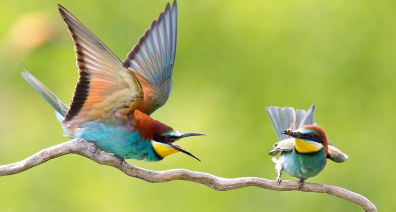 Beschreibung Aktionstag Tag des Vogels 2014