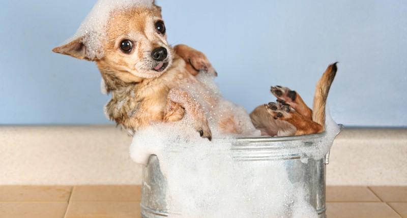 Beschreibung Aktionstag Bubble Bath Day 2014