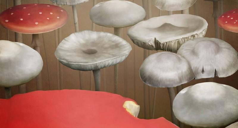 Beschreibung Aktionstag Tag des Pilzes 2014