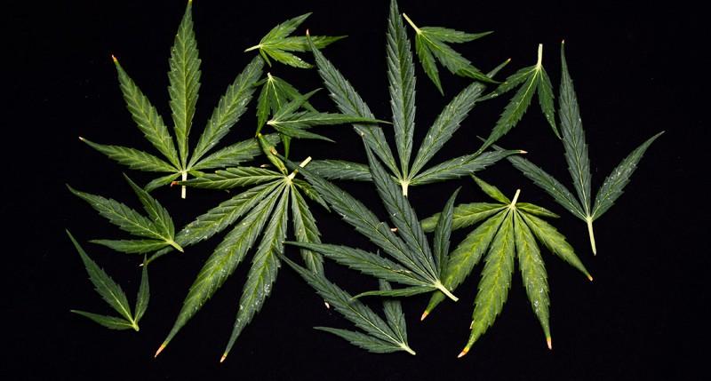 Beschreibung Aktionstag 420 - Cannabis Tag oder Marihuana Tag 2014