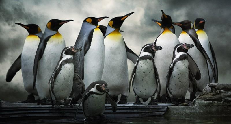 Beschreibung Aktionstag Welt-Pinguin-Tag 2014