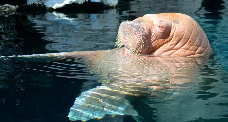 Beschreibung Welttag Tag der Ozeane 2014