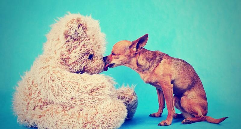 Beschreibung Aktionstag Tag des Hundes 2014
