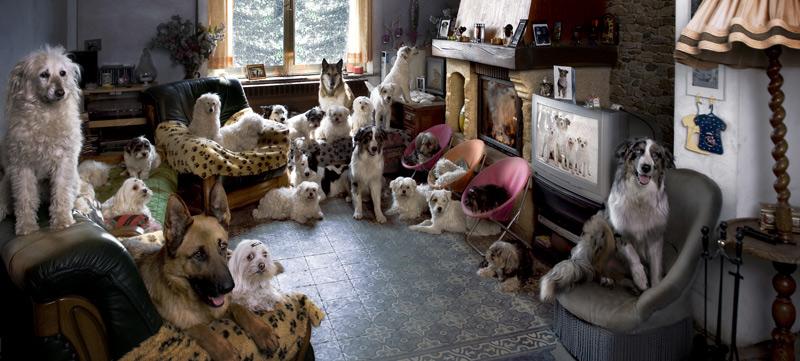 Beschreibung Aktionstag National Dog Day oder Tag des Hundes 2014