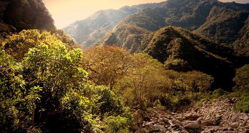 Beschreibung Aktionstag Tag der Tropenwälder 2014