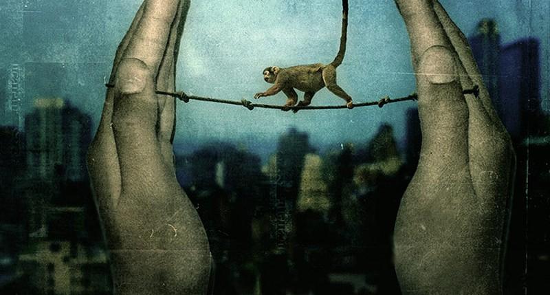 Beschreibung Aktionstag Affentag 2014