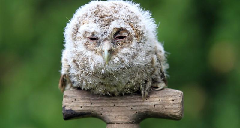Beschreibung Aktionstag Tag des Vogels 2015