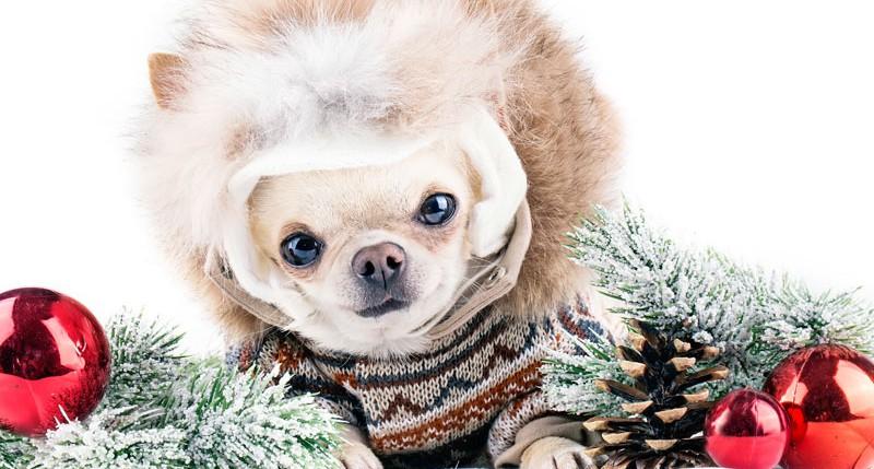 Beschreibung Aktionstag Zieh dein Haustier an Tag 2015