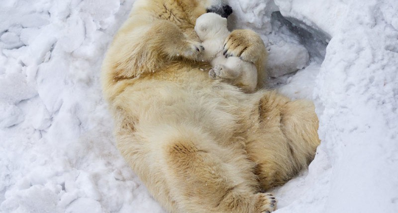 Beschreibung Aktionstag Tag des Eisbären 2015