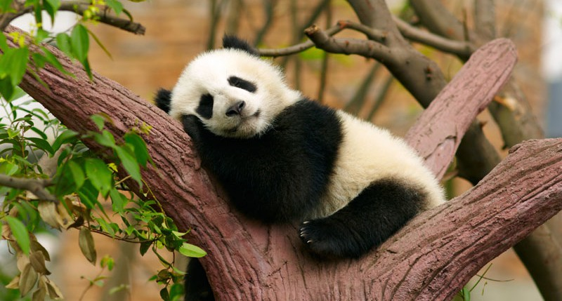 Beschreibung Welttag der freilebenden Tiere und Pflanzen oder Tag des Artenschutzes 2015