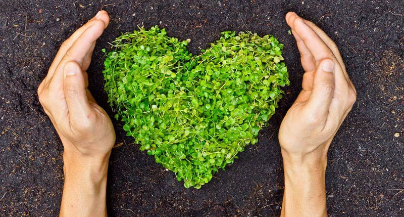 Beschreibung Aktionstag Ehrentag der Pflanze 2015