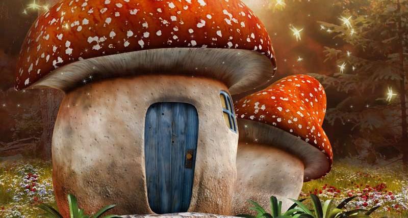 Beschreibung Aktionstag Tag des Pilzes 2015