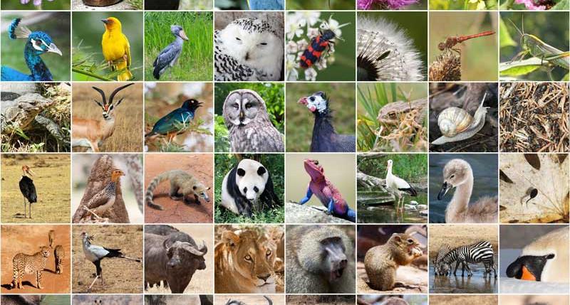 Beschreibung Welttag Internationaler Tag für biologische Vielfalt 2015