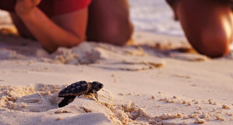 Beschreibung Aktionstag Welt-Schildkröten-Tag 2015