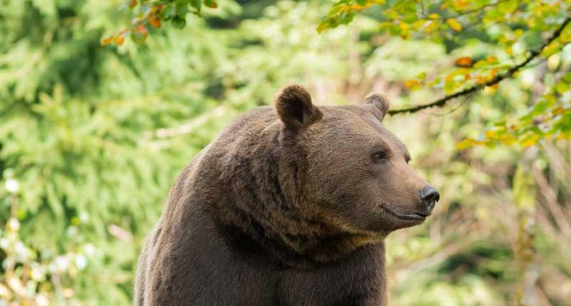 Beschreibung Gedenktag Bärengedenktag 2015