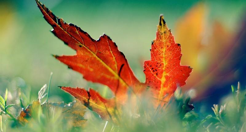 Beschreibung Jahreszeiten Meteorologischer Herbstbeginn 2015