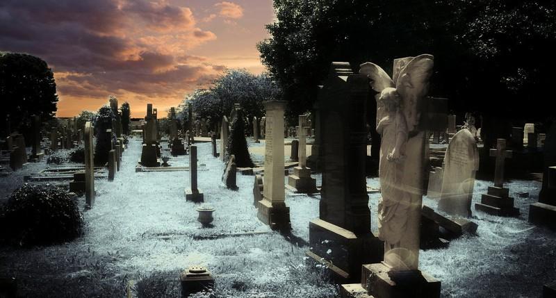 Beschreibung Aktionstag Tag des Friedhofs 2015
