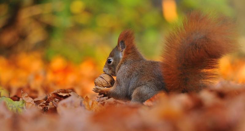 Beschreibung Jahreszeiten Kalendarische Herbstanfang 2015