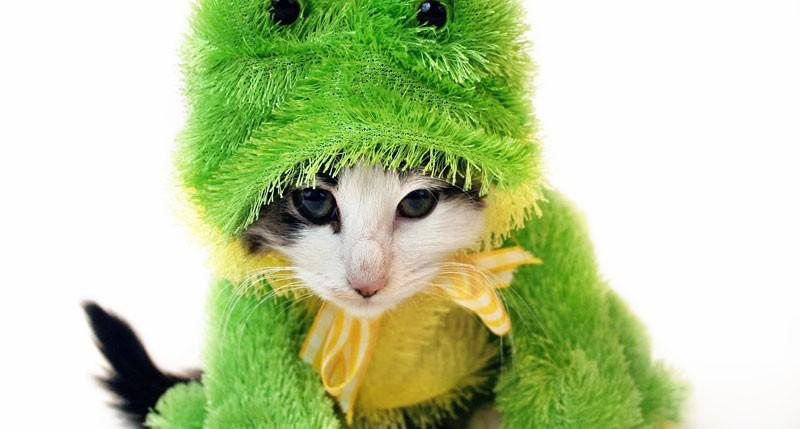 Beschreibung Aktionstag Zieh dein Haustier an Tag 2016