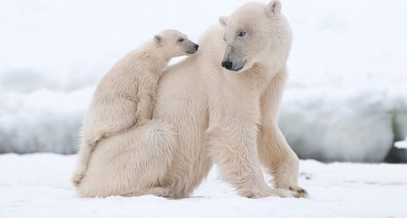 Beschreibung Aktionstag Tag des Eisbären 2016
