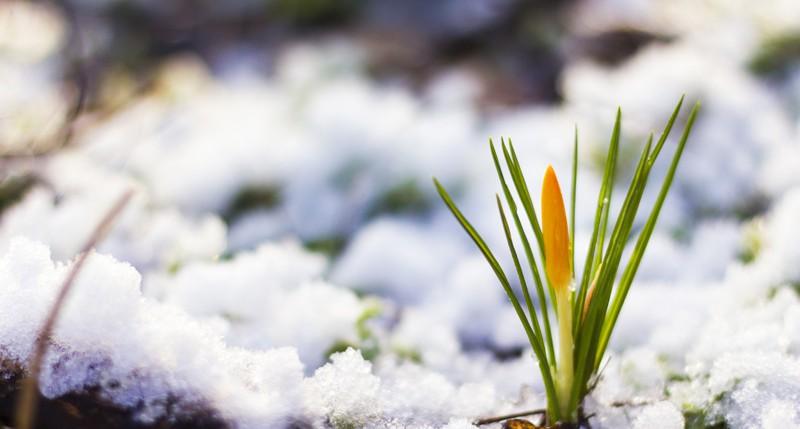 Beschreibung Jahreszeiten Meteorologischer Frühlingsbeginn 2016