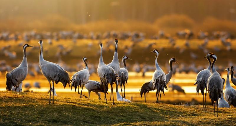 Beschreibung Gedenktag Weltzugvogeltag 2016