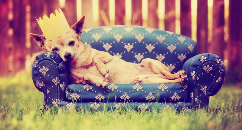 Beschreibung Aktionstag Tag des Hundes 2016
