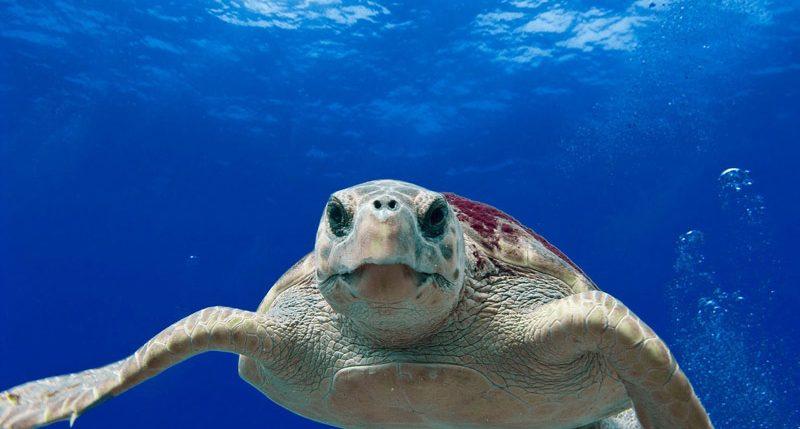 Am 8. Juni ist Tag der Ozeane.Weitere Informationen und Hintergründe zum Welttag der Ozeane findest Du hier.Mehr als 70 % der Erdoberfläche sind mit Wasser bedeckt.