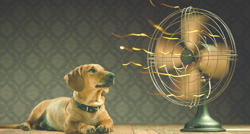 Alle Informationen und Hintergründe zum Brauchtum Hundstage. Nein