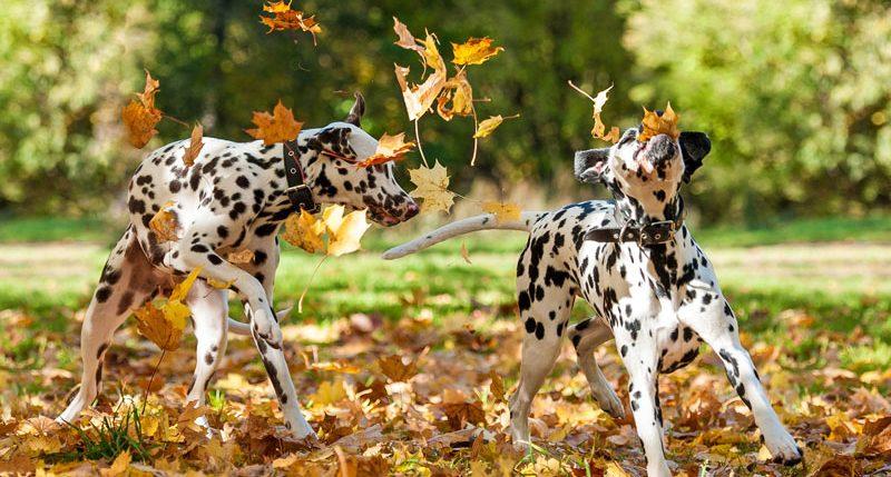 Am 22. September ist Herbstanfang. Weitere Informationen und Hintergründe zum Herbstanfang und der Jahreszeit Herbst findest Du hier.