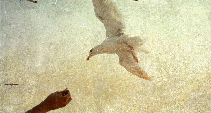Am 21. März ist Welttag der Poesie. Weitere Informationen und Hintergründe zum Aktionstag der Poesie findest Du hier.