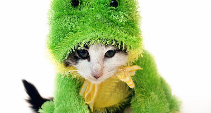 Am 14. Januar ist Zieh dein Haustier an Tag. Weitere Informationen und Hintergründe zum Aktionstag Zieh dein Haustier an Tag findest Du hier.